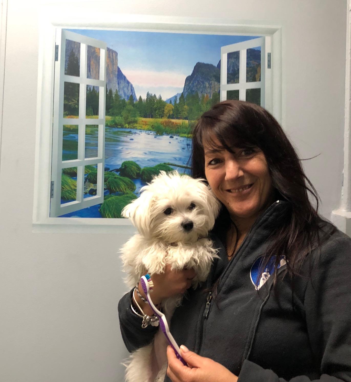 Home Veterinarian In Scarsdale Ny Scarsdale Animal Hospital